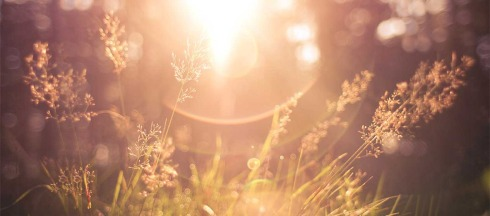 Sun_grass_light